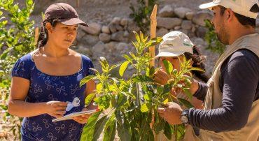 Manejo agroecológico de plagas y enfermedades