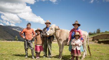 Producción agroecológica de pastos y forrajes alto andinos  2017