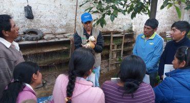 Región Lima: FORMAGRO organiza pasantía a experiencias exitosas de manejo productivo de cuyes en la agricultura familiar