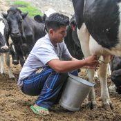 Aldo Conde: la juventud en la ganadería