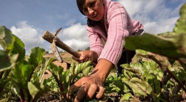 Apoyo internacional trabaja por mejorar economía del agro
