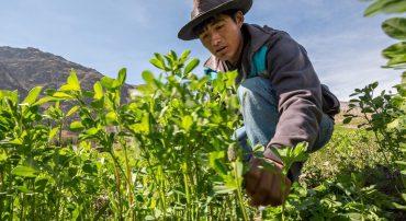 Producción agroecológica de pastos y forrajes altoandinos (virtual)
