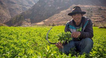 Producción agroecológica de pastos y forrajes altoandinos