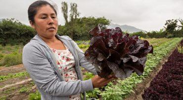 Región Lima: 21 jóvenes productoras y productores participantes de FORMAGRO reciben constancia de conformidad del Sistema de Garantía Participativo – SGP para la producción agroecológica