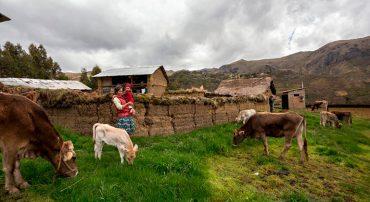 Producción sostenible de bovinos en zonas altoandinas