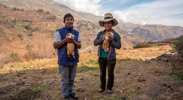 Producción sostenible de cuyes para la agricultura familiar