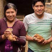 Cuyes agroecológicos Virgen de las Mercedes de Yanama