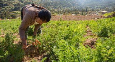 La agricultura familiar: retos y posibilidades