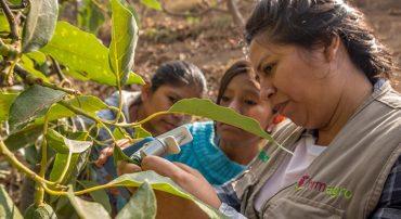Manejo agroecológico de plagas y enfermedades (virtual)